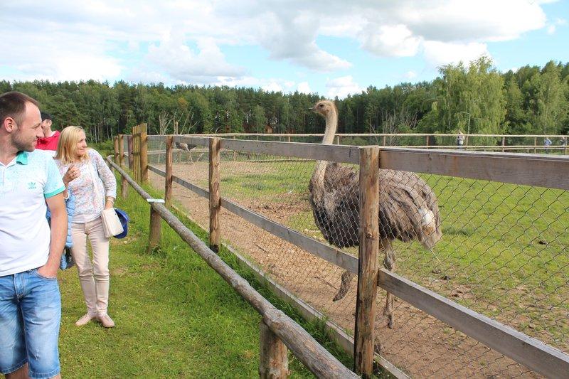 На турбазе есть страусы