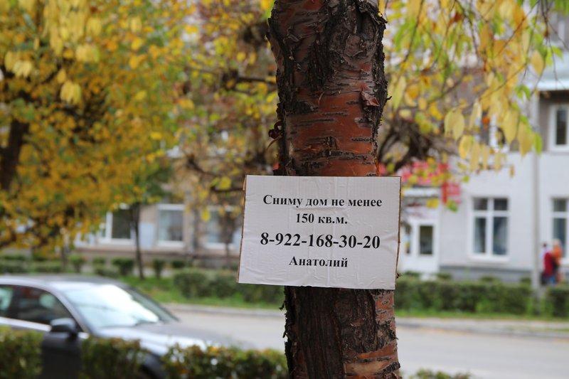 Гуляешь по центру города и внезапно на дереве объявление