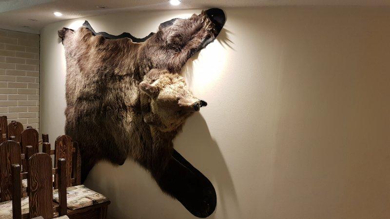 Медведь передает всем привет