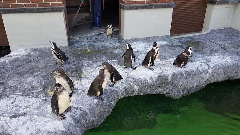 Рядом со входом тусуют пингвины