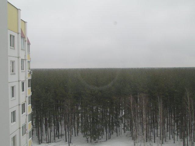 Квартира на краю лесного массива