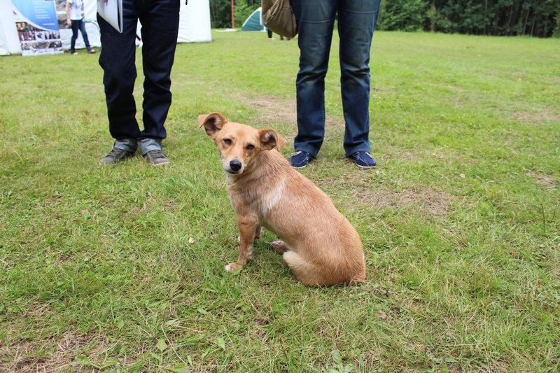 Местная собака активно знакомилась с приезжающими