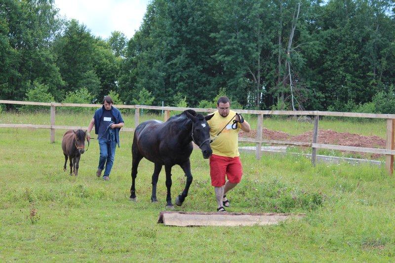 мы с лошадкой сумели пройти все препятствия