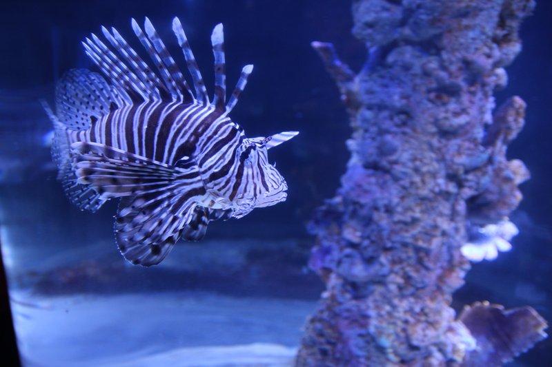 Посмотреть рыбок в большом аквариуме