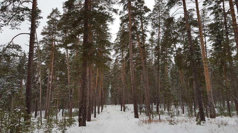 Сам бор на месте, хотели нагуляться по лесу - нагулялись