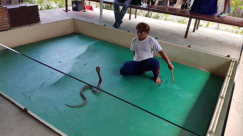 Экскурсия на змеиную ферму - достаточно интересная