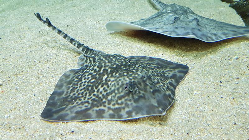 Дальше начинаются аквариумы с живыми рыбками