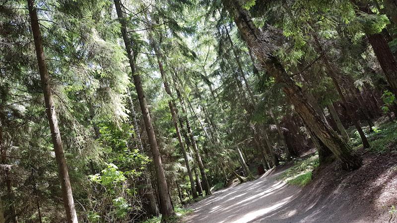 Сам лес очень приятный